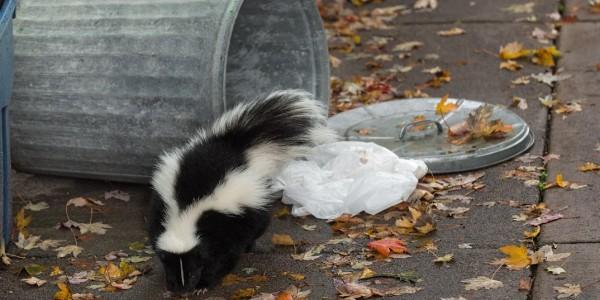 Skunk2